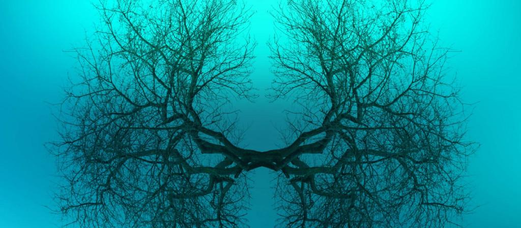Zweige eines Baumes die die Form der menschlichen Lunge annehmen