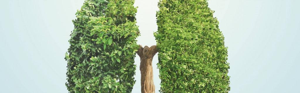 Ein Baum der so getrimmt wurde, dass er die Form einer Lunge annimmt